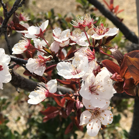 春✿新しいスタート♪